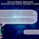 vaccine myths debunked have human fetuses in them cell lines ingredients